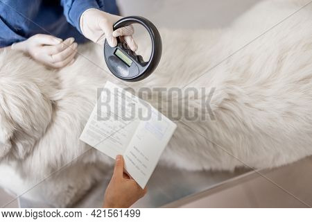 Veterinarian Checking Microchip Implant Under Sheepdog Dog Skin In Vet Clinic With Scanner Device An