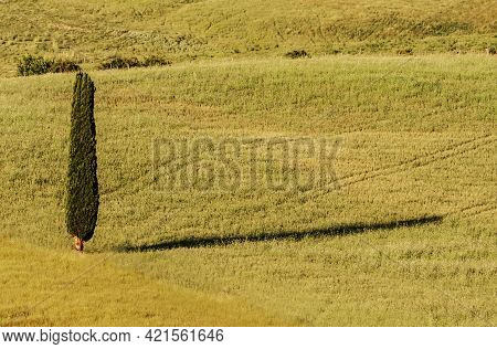 Coloured View Of Tuscan Landscape Wit An Isolated Cypress, Italy