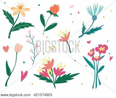 Set Of Wildflowers. Botanical Collection. Wildflowers, Herbs, Leafs. Garden And Wild Foliage, Flower