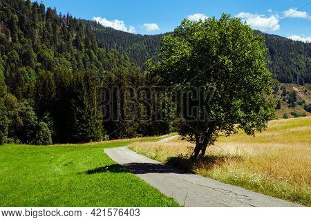 Single Tree Next To A Small Concrete Winding Road, Mountains In The Background Near Feldberg In The