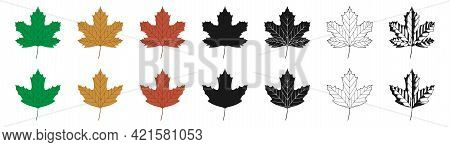 Vector Illustration Of Green, Yellow And Red Sycamore Leaves In Different Styles, Isolated On A Whit