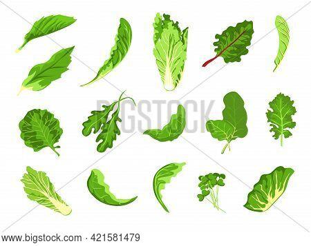 Salad Leaves. Green Fresh Farm Food, Lettuce, Cabbage, Arugula, Cress And Kale. Healthy Microgreen S