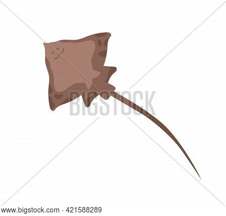 Sea Stingray With Tail Or Stinger. Marine Sting Ray Fish Isolated On White Background. Bottom View O