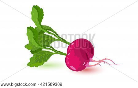 Cartoon Of Healthy Vegetable Product, Mellow Bulb With Green Leaf. Vector Light Snack, Ingredient Fo