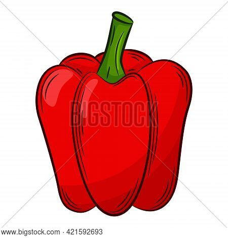 Paprika Pepper. A Vegetable In A Linear Style, Drawn By Hand. Food Ingredient, Design Element.color