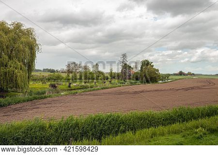 Dutch Polder Landscape With Potato Ridges And A Smal Winding Stream. The Photo Was Taken In The Prov