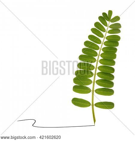 Beautiful plant leaves as writing pen feather minimal graphic art concept. Abstract picture on white background