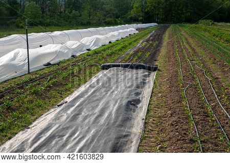 Long Healthy Rows Of Vegetables On An Organic Farm, White Garden Fabric Row Covers, Ground Covers, A