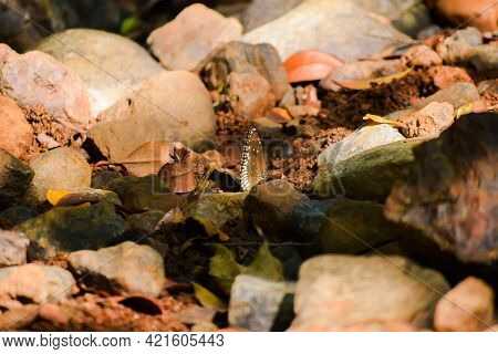 Rocks In The Dry Water Spring From The Forest With Butterfly At Centre And Differential Focus During