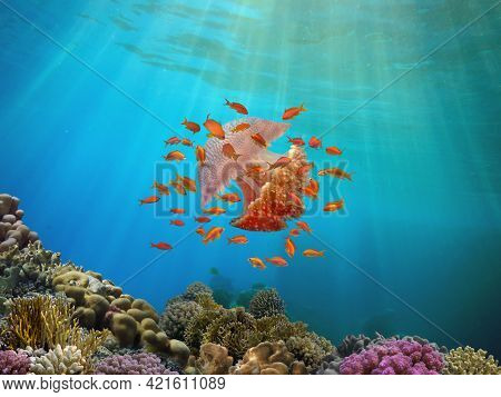 Shoal Of Fish And Giant Jellyfish Swimming In Blue Water