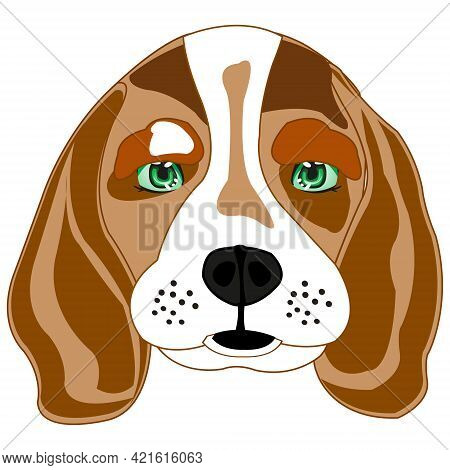 Dog Beagle On White Background Is Insulated