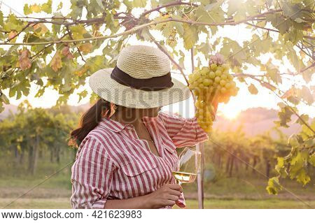 Young Woman With A Glass Of White Wine In The Vineyards Of Italy. Person With A Hat In The Rays Of T