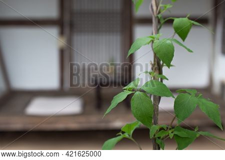 Traditional Korean Style House With Green Leaves