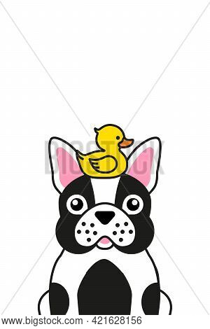 Cute French Bulldog With Yellow Rubber Duck