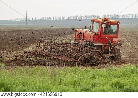 An Old Red Caterpillar Tractor Plows The Field With A Plow. There Are Many Crows On The Ground. Agri