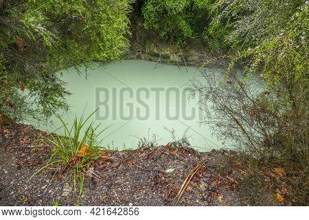 Geothermal Pond At Kuirau Park At The Rotorua Region In New Zealand