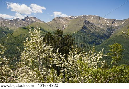 Spring View Of The National Park Of Sibillini Mountains From Pintura Di Bolognola With White Flowers