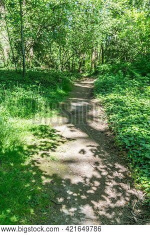 A Dirt Path And Trees At Salwater State Park In Des Moines, Washington.