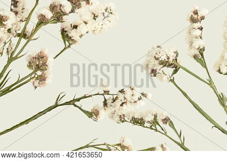 Blooming white statice flower on a green background
