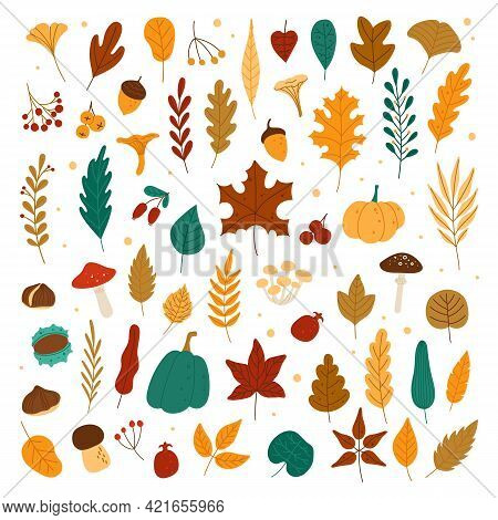 Autumn Elements. Leaves, Acorns, Chestnuts, Berries, Pumpkins, Mushrooms. Fall Forest Foliage And Au