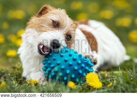 Playful Happy Cute Dog Puppy Chewing, Playing With A Toy Ball In The Grass. Pet Care.