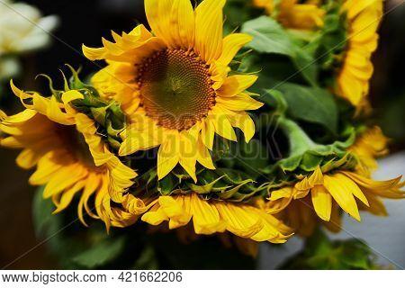 A Bouquet Of Sunflowers. Festive Bouquet Of Sunflowers. Flowers. Sunflower.