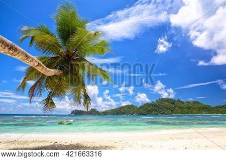 Beautiful Palm Beach In Mahe Island, Seychelles