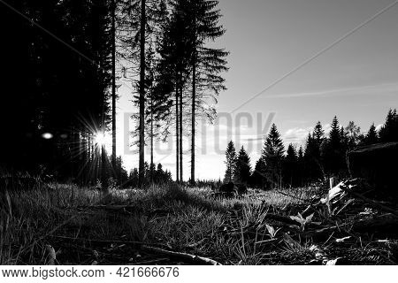 Reitzenhain, Germany - May 23, 2021: Sunset In Ore Mountains Wood