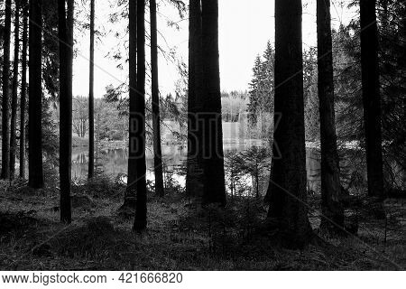 Reitzenhain, Germany - May 23, 2021: Forest Lake In Ore Mountains