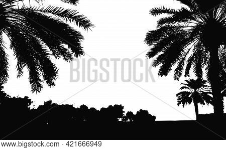 Palm Trees Vector Silhouette. Coconut Palm Tree With Coconuts Vector. Beach Vector Trees. Eps 10