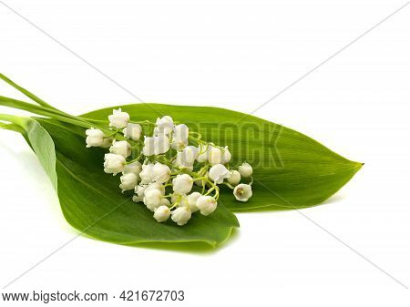 White Flowers With Green Leaves, Lily Of The Valley ( Convallaria Majalis, May Bells, May-lily ) On