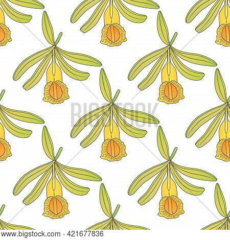 Vector Graphic Seamless Pattern With Vanilla Plant -03