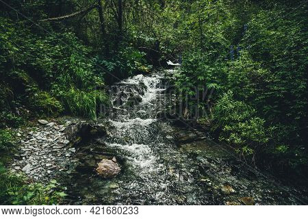 Scenic Green Landscape With Clear Mountain Stream Among Lush Vegetation And Thickets In Forest. Atmo