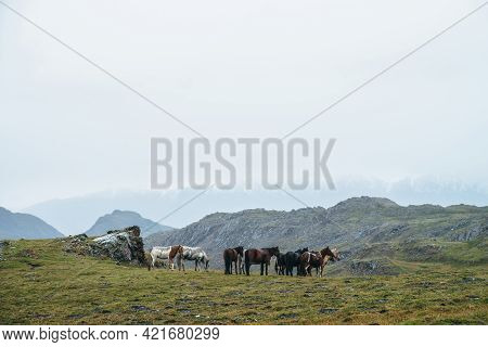 Beautiful Horses Graze In Highlands. Scenic Alpine Landscape With Horse Herd On Green Hill Among Roc