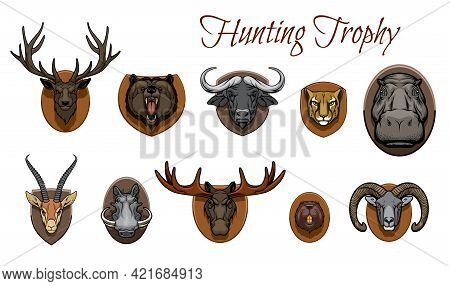 Hunting Trophies Animals Heads. Vector Deer, Roaring Grizzly Bear Muzzle And African Buffalo, Cheeta