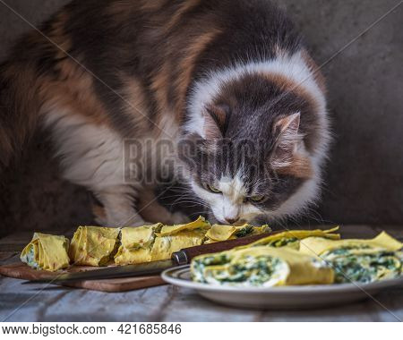 Naughty Fluffy Cat On The Table Sniffing Rolls With Vegetables On A Light Plate And Kitchen Board