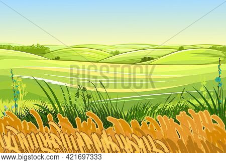 Wheat Fields. Rural Village Landscape. Meadow Hills And Pastures. Ears Of Cereals: Barley, Rye. Summ