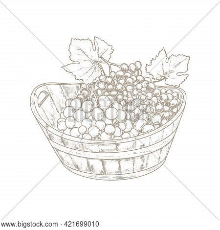 Grapes In A Wooden Basket, Vintage Vine In The Style Of Woodcut