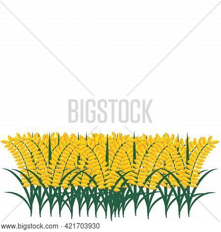 A Vector Of Paddy Plant On White Background. Paddy Plantation Is Another Source Of Income For Malays