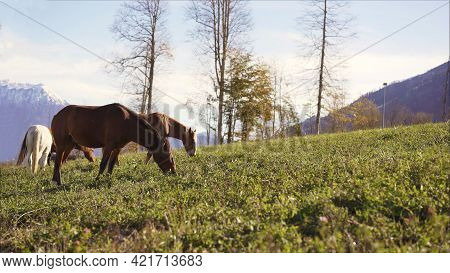 Horses Graze On Hillsides On A Sunny Day. Horses Graze On The Mountain On A Summer Day.