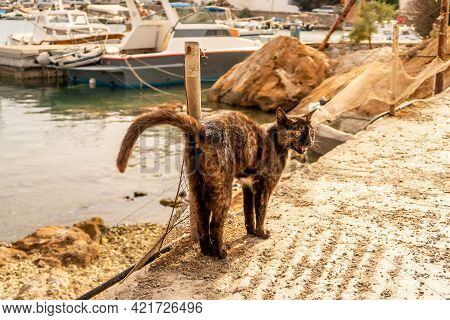 Brown Homeless Erect Grumpy Cat With Yellow Eyes Walking On The Pier In Finikas Port, Greece With Ha