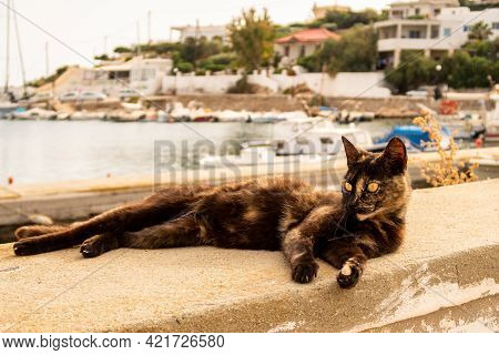 Dark Brown Ugly Street Cat With Yellow Eyes Lying At The Stone Fence In Finikas Port, Greece With Ha