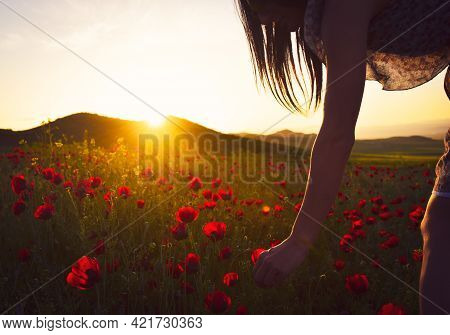 Young Caucasian Woman Picking Flowers On A Summer Evening.cinematic Summer Glow Filter Background