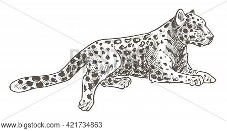 Leopard Animal Laying, Calm Cheetah With Tail