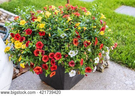 A Planter Full Of Red, Yellow And White Million Bells Flowers