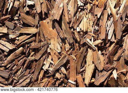 Tree bark splinters close up as background.