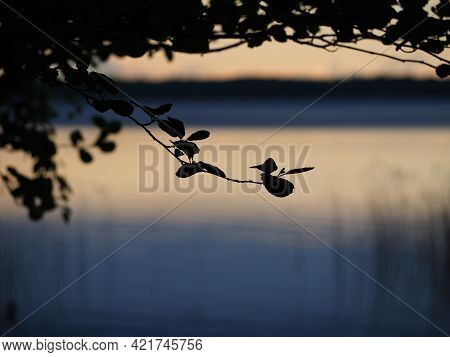 Tree Branch With Leaves Silhouette On A Lake Background. Peaceful Evening Mood