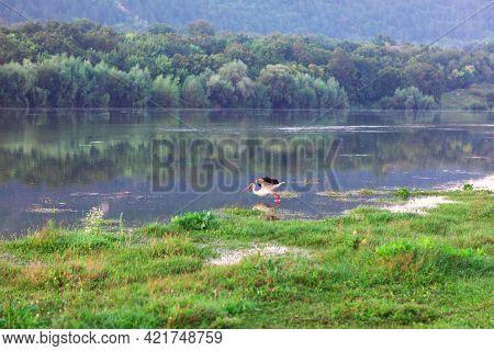 Stork On The River Bank . Idyllic Riverside Nature With Wild Bird