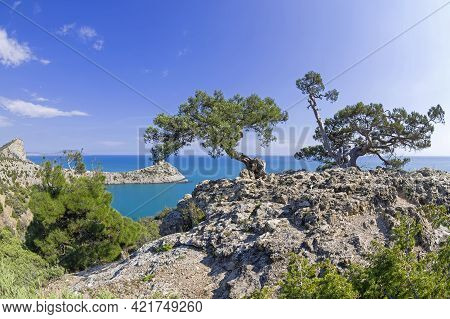 Two Old Curved Relict Tree-like Juniper (juniperus Excelsa). On A Rock Above The Sea. Karaul-oba, No