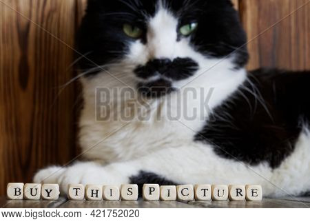 Caption: Buy This Picture With A Funny Cat In The Background. A Playful Concept Of Advertising, Sugg